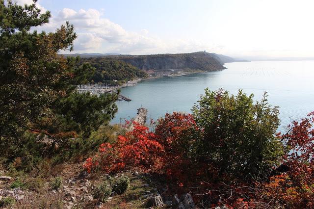 colore rosso degli arbusti del sentiero di rilke in autunno