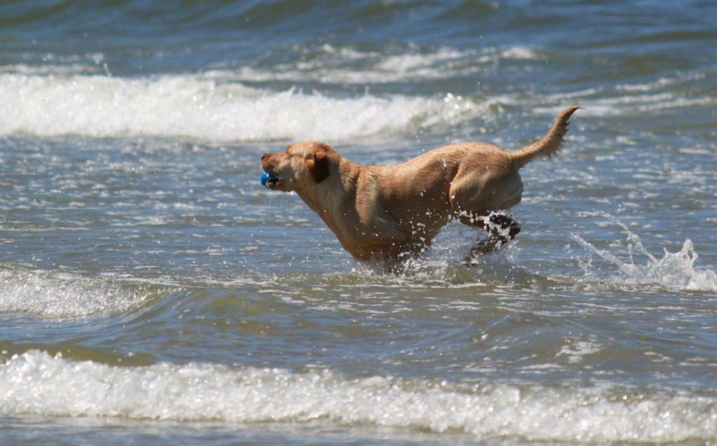 viaggiare col cane senza avere problemi