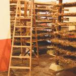 uva ad essiccare vinsantaia capezzana