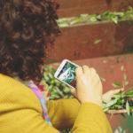 foto alla foto olive capezzana