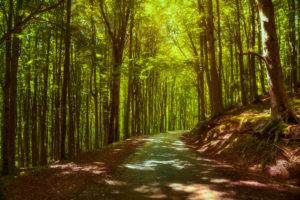 foreste_casentinesi