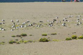 spiaggia del la granja a porto