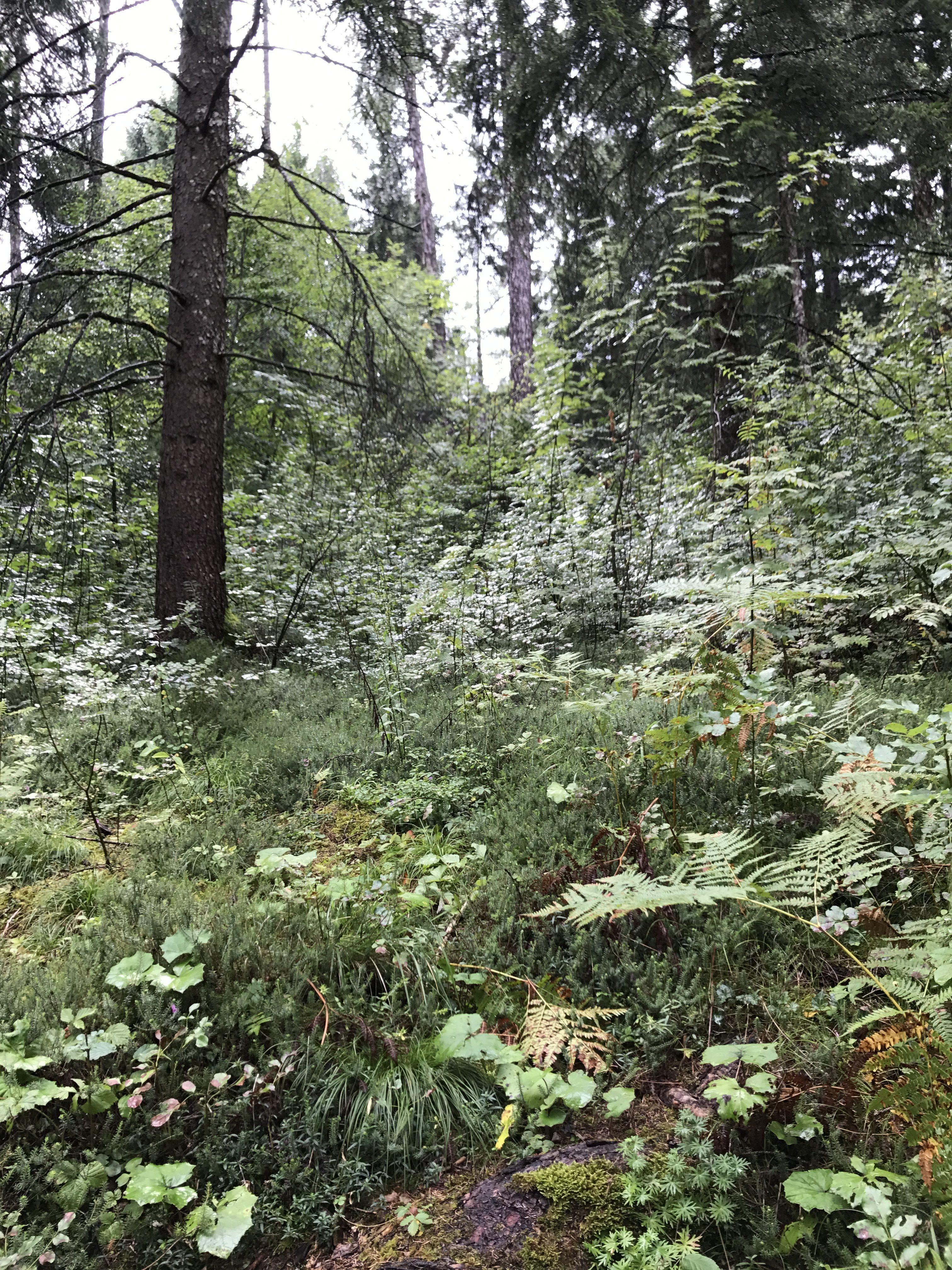 boschi trentino