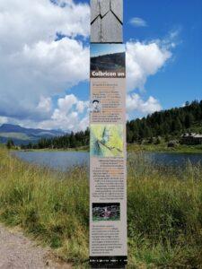 escursione facile ai laghi colbricon in val di fiemme